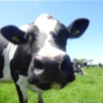 FarmWizard Farm Management Software