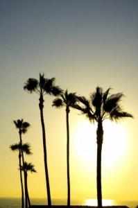 Palm Beach Drug Rehab