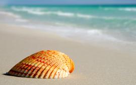 home_beach