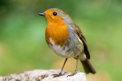 Bird Watching Near Your Home Boosts Mental Health