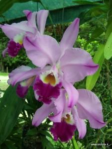 Le Orchidee A Schio Giardino Jacquard 2012 22 23