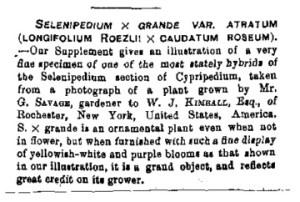 phragmipedium_grande_descrizione_come_selenipedium