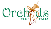 logo_orchids_13_200