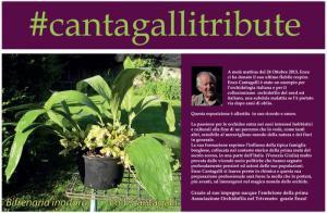 pordenoneorchide_cantagalli-pordenone-orchidea-2014