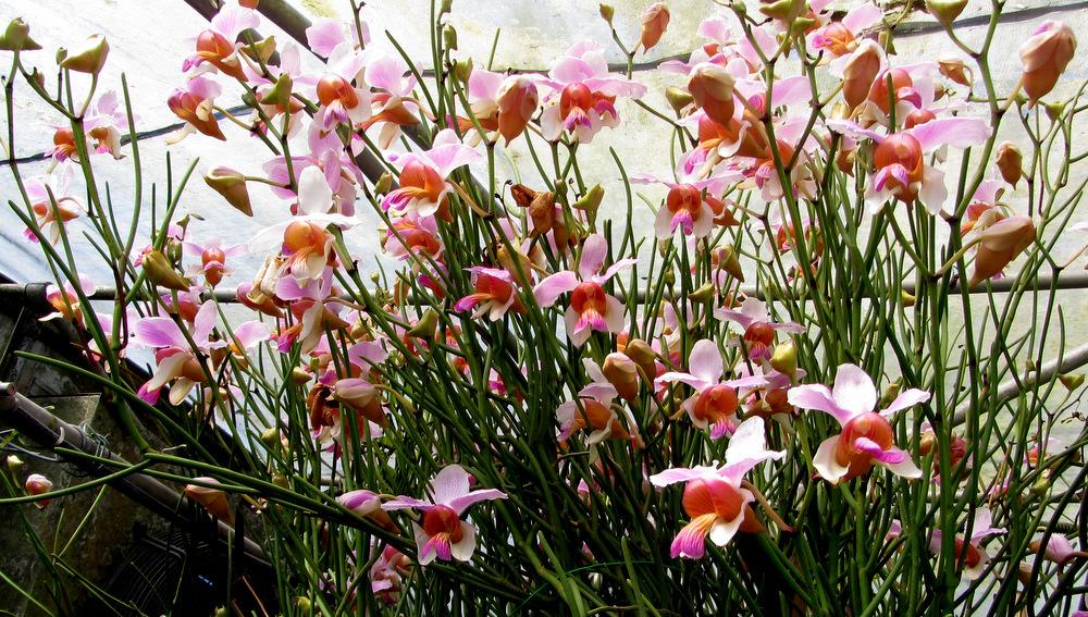 Piccola guida per nutrire le orchidee