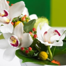 How to select the best orchid