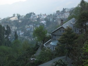 Orchid Wonders of Sikkim