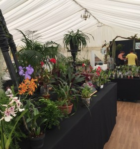 Orchid Study Group Display