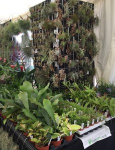Another view of the display from Crafty Plants