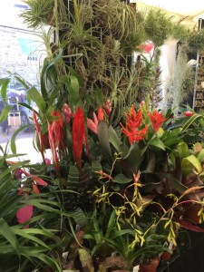 Part of the display from Crafty Plants