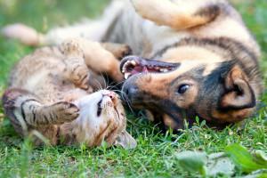 ordbajsarn-kattforsakring2