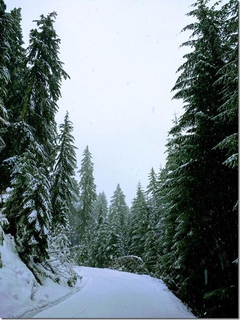 beginner cross country skiing near seattle trail
