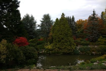 south seattle urban hike kubota gardens pond