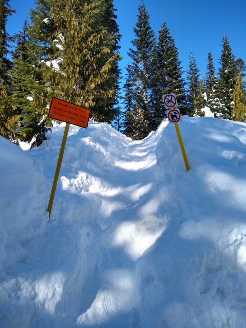 A snowbank with two trail signs in it and lots of evergreen trees