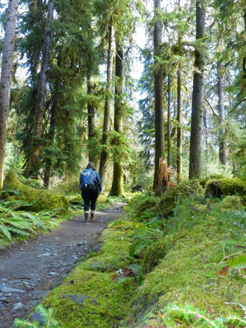 A woman with a backpack walking on a trail through a forest of tall trees and mossy undergrowth