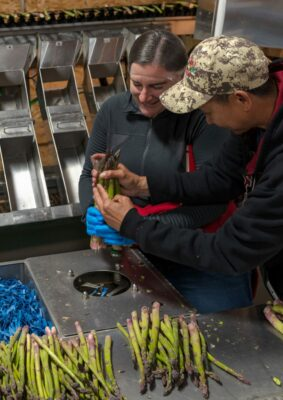 A woman and a man processing asparagus. The asparagus is bundled and boxed for shipment around the country.