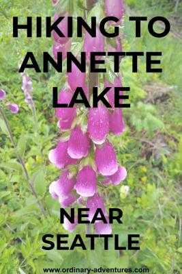 A tall, thin stalk of bright purple flowers. In the background there is green vegetation. Text reads: Hiking to Annette Lake near Seattle