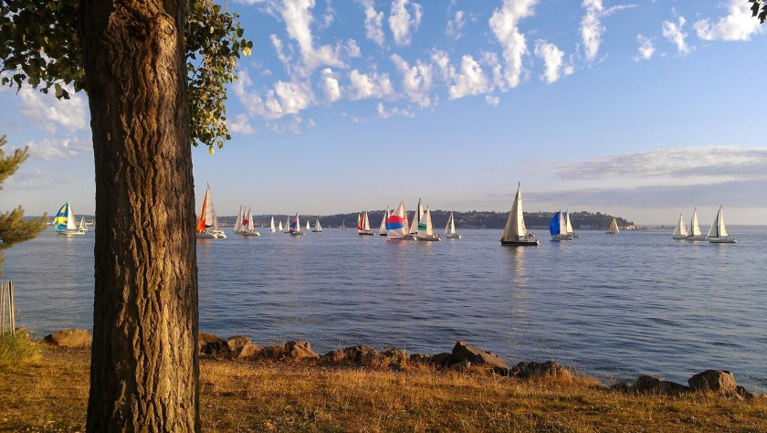A tree in the grass in the foreground next to the shore of the water. There are lots of sailboats with many colored sails just off shore. There is a blue sky with small white clouds