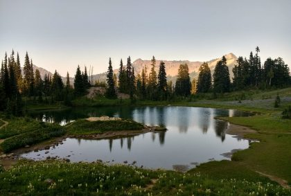A small, shallow pond at sunset. Around the pond is a green meadow with wildflowers, mostly white ones. There are evergreen trees behind the pond and in the distance steeper mountains