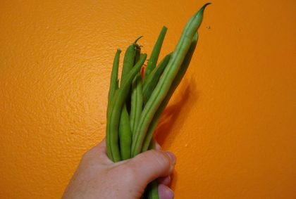 A person's hand is holding a bunch of fresh green beans against an orange background
