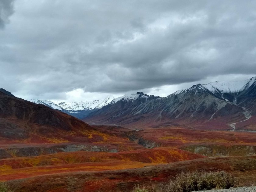 Views along the park road during the Denali Road Lottery in mid September. There is a valley with bright orange and red fall colors among the bushes. In the distance are mountains with fresh snow. It's an overcast day