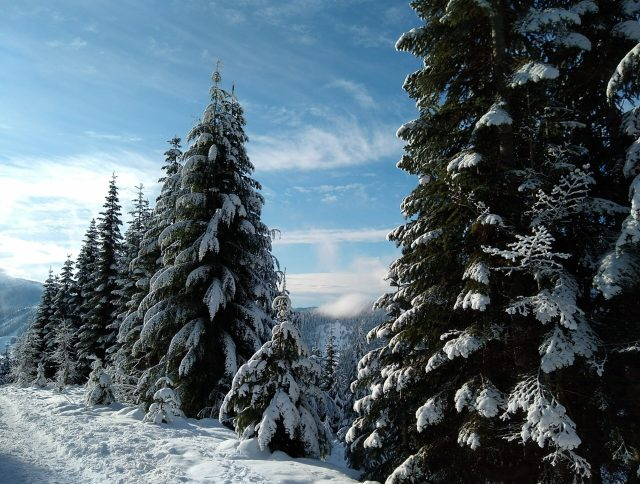 Snow covered evergreen trees with distant mountains on the Kendall Peaks trail, a beginner snowshoeing trail near Seattle