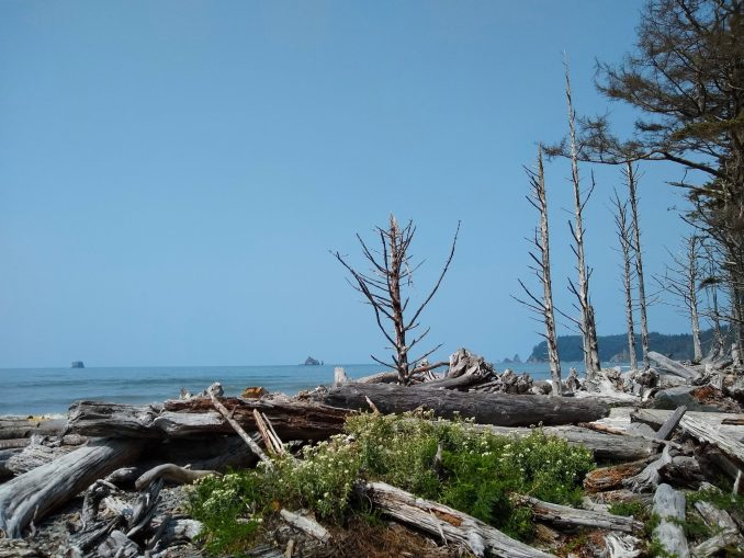 Driftwood piled up on Rialto Beach in Olympic National Park. In the distance are several rock formations and small islands in the ocean