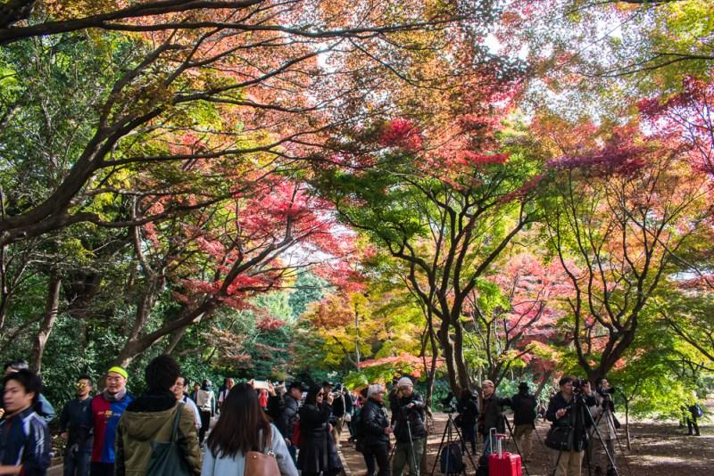 what to do at shinjuku gyoen