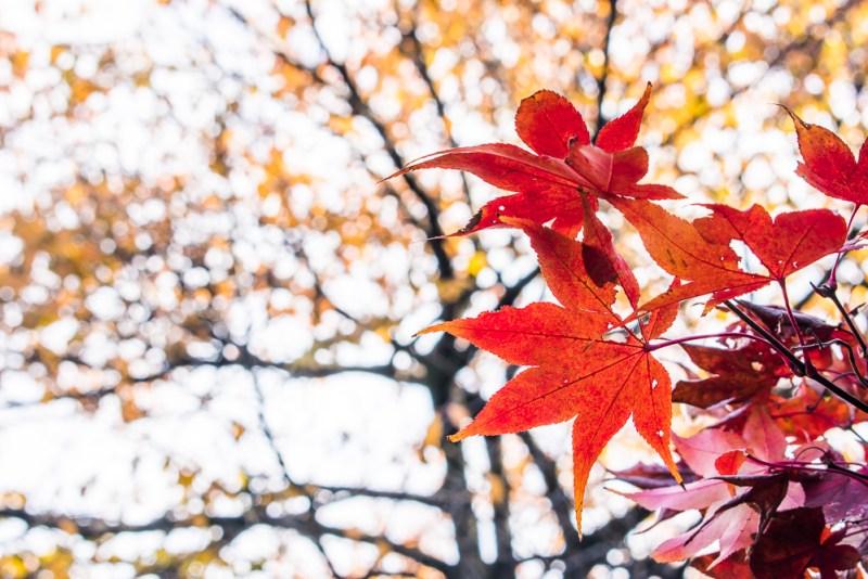 shinjuku gyoen autumn leaves