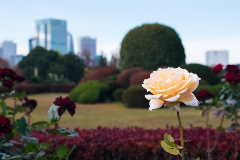 shinjuku gyoen beautiful photos