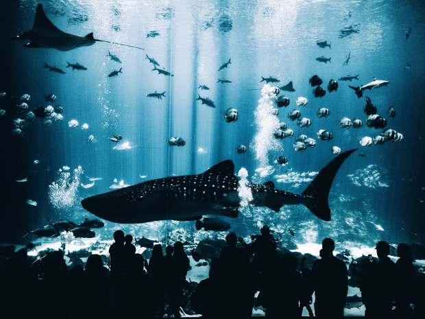 things to do in osaka - aquarium