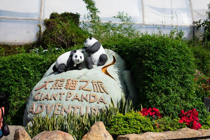 giant panda - ocean park