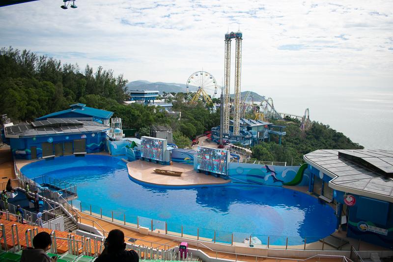 hk ocean park dolphin