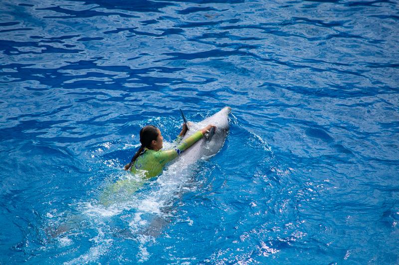 ocean park hk attractions - dolphins