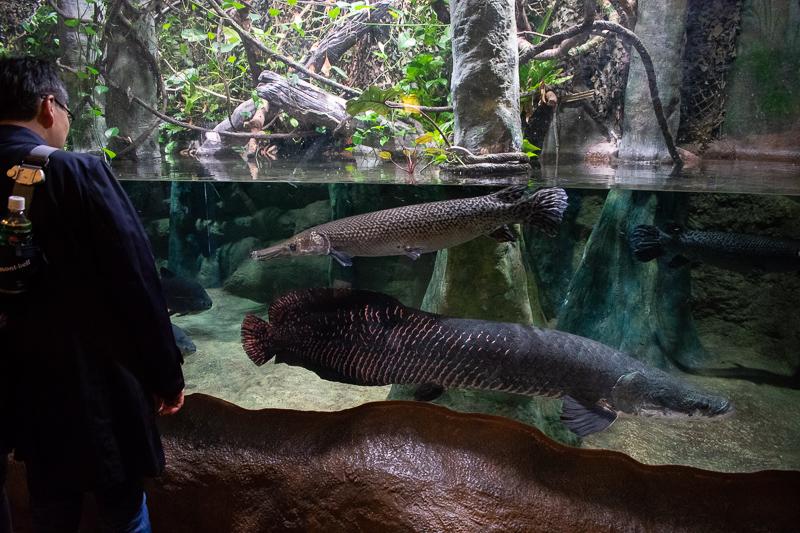 ocean park hk rainforest