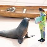 ocean park seal show