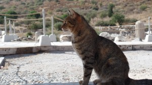 Ephesus Cat, who blended right into the ruins!