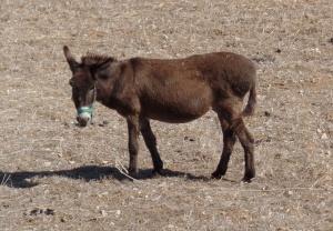 Sweet looking donkey near Olympos.