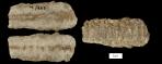 Armenoceras_richmondensis_800px