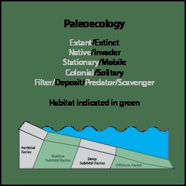B.simulatrix_paleoeco