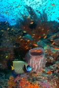 reef-coral-and-fish