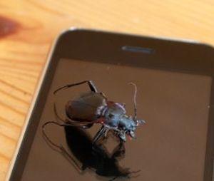 Bug iPhone
