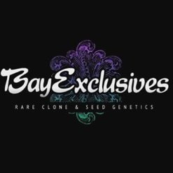 BAY EXCLUSIVE