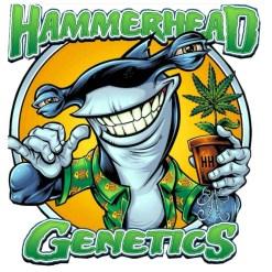 HAMMERHEAD GENETICS