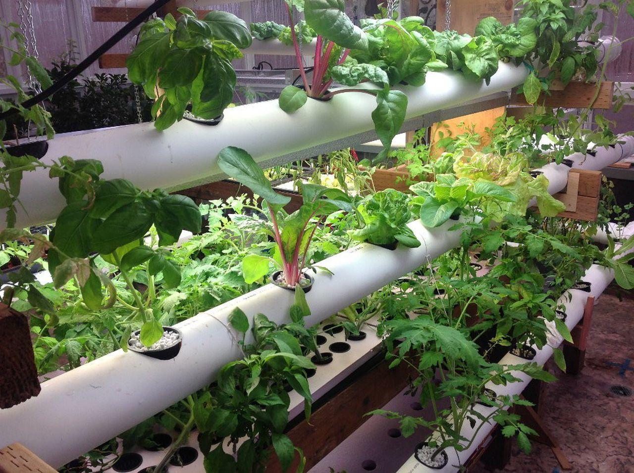 Pvc Planting Vegetables