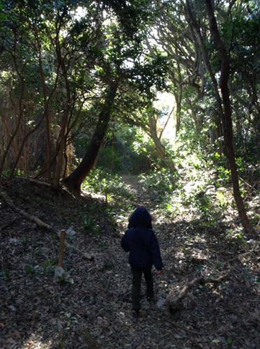 ほうべの森の中