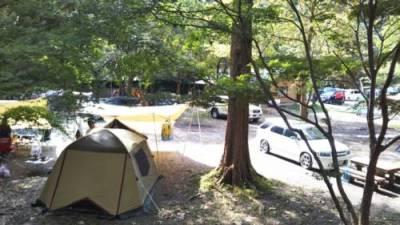 ならここキャンプ場フリーサイト