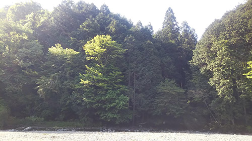 モミの木キャンプ場川辺