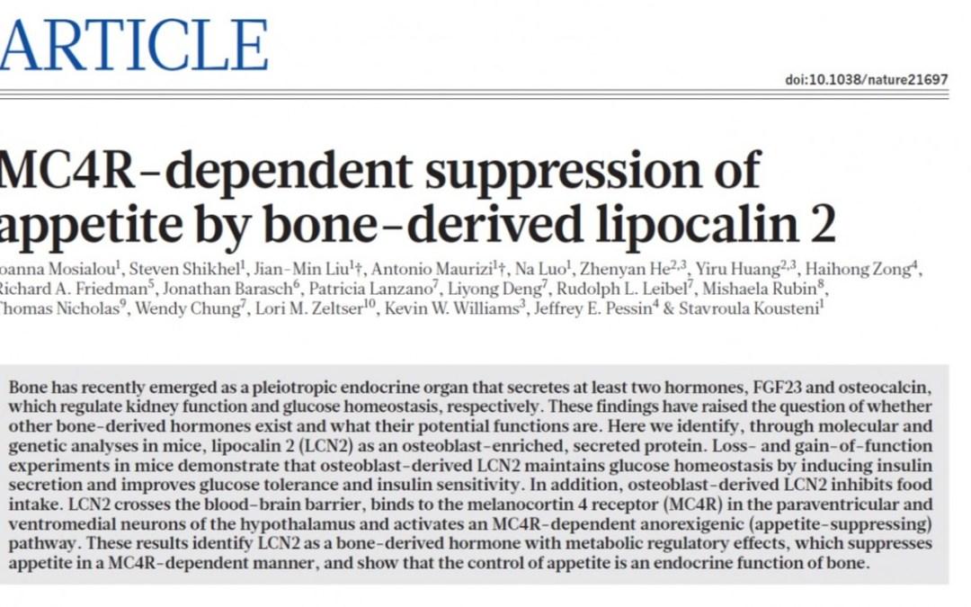 Bone-Derived Hormone Suppresses Food Intake