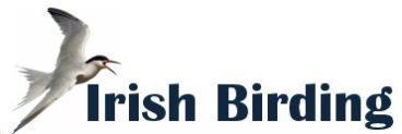 Irish Birding website